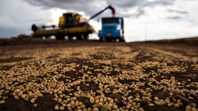 Grãos de soja em estrada rural durante colheita, nas proximidades de Londrina, no Paraná - Sergio Ranalli - 4.mar.2021/Folhapress